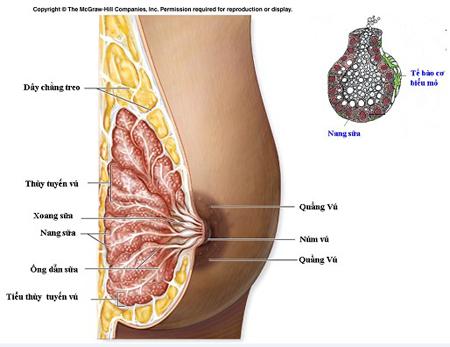 Thu gọn núm vú tại Thẩm mỹ Thu Cúc Sài Gòn là tiểu phẫu đơn giản, thực hiện nhanh gọn và an toàn, không làm ảnh hưởng đến chức năng của bầu ngực