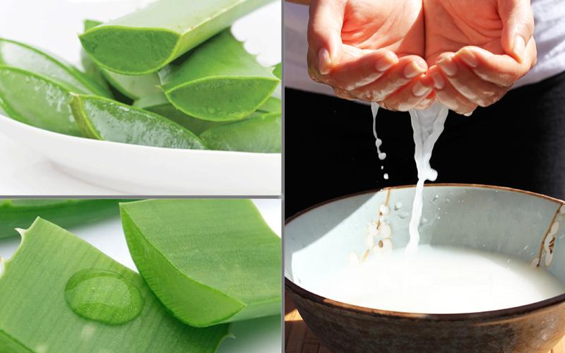 Nha đam và nước vo gạo đều là những nguyên liệu giúp trị tàn nhang hiệu quả