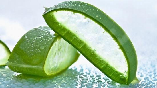 ừ lâu, lô hội đã được sử dụng như một phương pháp dưỡng da tối ưu từ thiên nhiên.