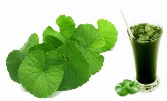 Rau má khá lành tính, không chỉ có tác dụng giải độc, làm mát da mà còn là thức uống bổ dưỡng có công dụng điều trị sẹo lồi từ bên trong.
