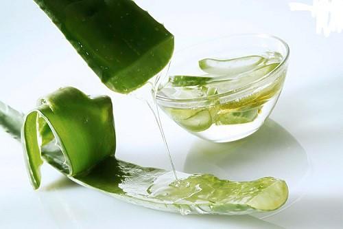 Nha đam là nguyên liệu dưỡng môi tốt mà lại vô cùng dễ kiếm.
